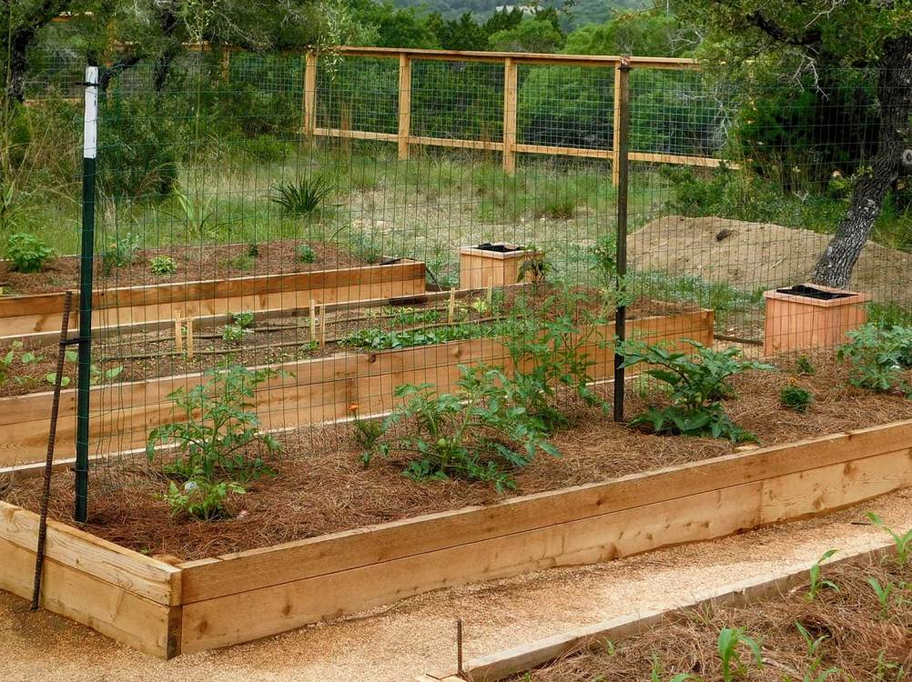 Edible Permaculture Designs and Raised Veggie Beds - Food Archives – Austin Native Landscaping