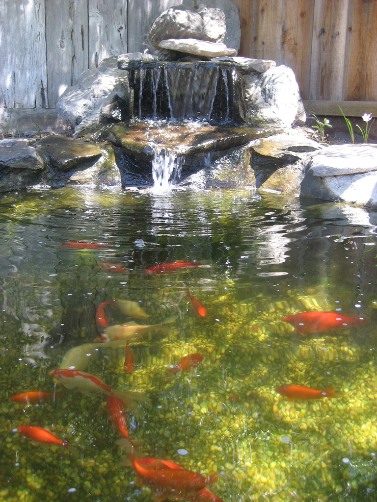 Above Ground Fish Pond
