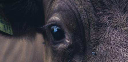 animal-welfare5