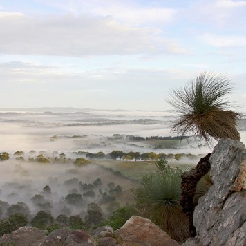 """Xanthorrhoea quadrangulata at Mt Barker Summit SA"" by Leanne Osmond"