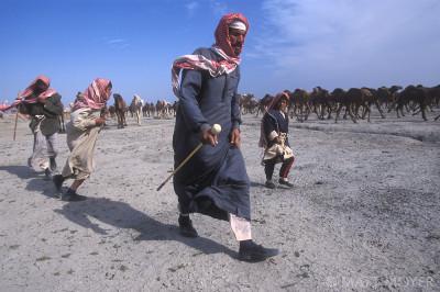 Camel Herders