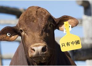 Australian Beef not for Australian Consumption