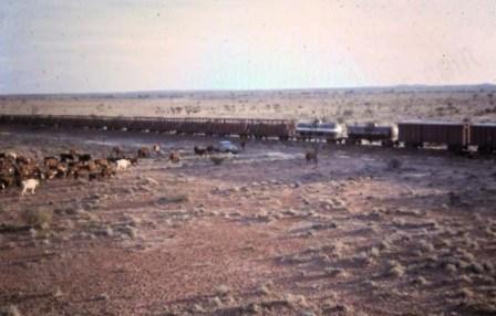 cattle train_edited-1