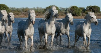 Horses Age