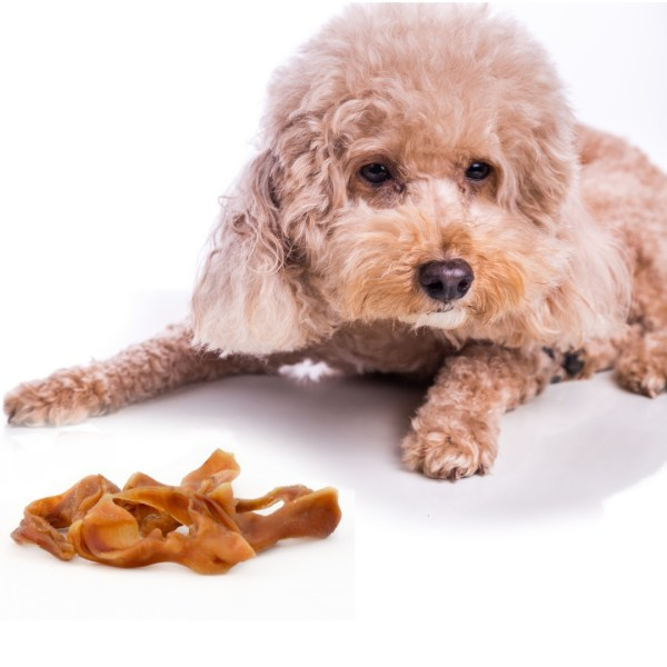Pig Ear Strips with Dog
