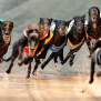 Melbourne Cup Bold Trease 2016 Heats Tips Greyhound Racing