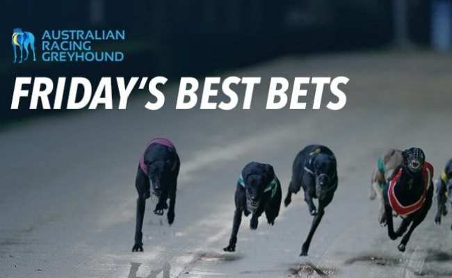 Greyhound Tips For Early Greyhound Racing On Friday 9th