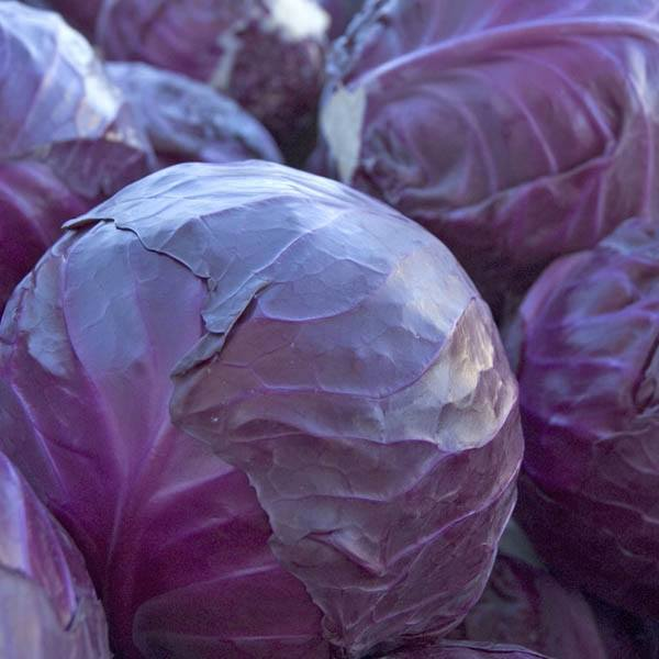 CABBAGE Red Acre - Cabbage – Australian Seed