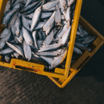 How to Effectively Start Your Own Seafood Business