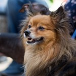 Entries Close Soon in National competition to find Australia's most #Lykable Dog