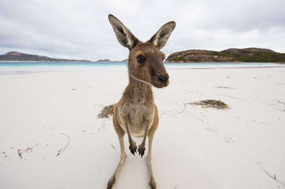 Best places to see Australian animals