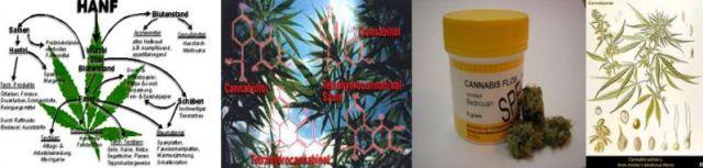 Wirkungsweise und Zusammensetzung der Hanfpflanze