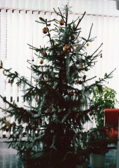 The ideal shape of an Austrian Christmas Tree is quite different from an American tree.