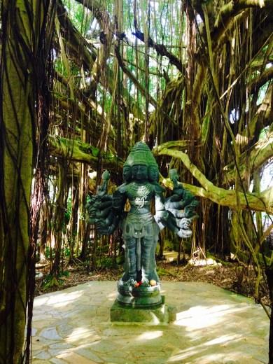 Large Banyan Tree
