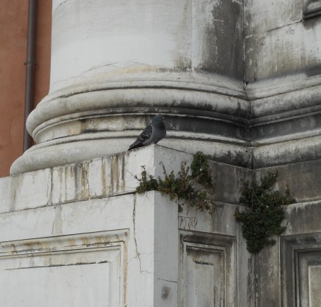 Pigeon Looking for a Nesting Spot on a Building in Venice