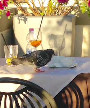 A Pigeon Enjoying the Leftovers of an Aperitivo with Aperol Spritz