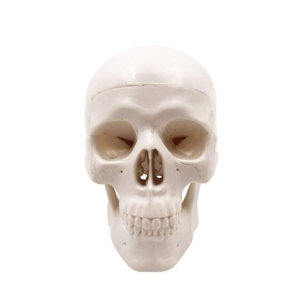 Mini Human Skull Model, Palm-Sized Desktop Skull 3.9 x 2.7 x 3.1 Inch with Removable Cap and Jaw Moveable 3