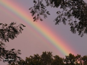 Thanksgiving Rainbow