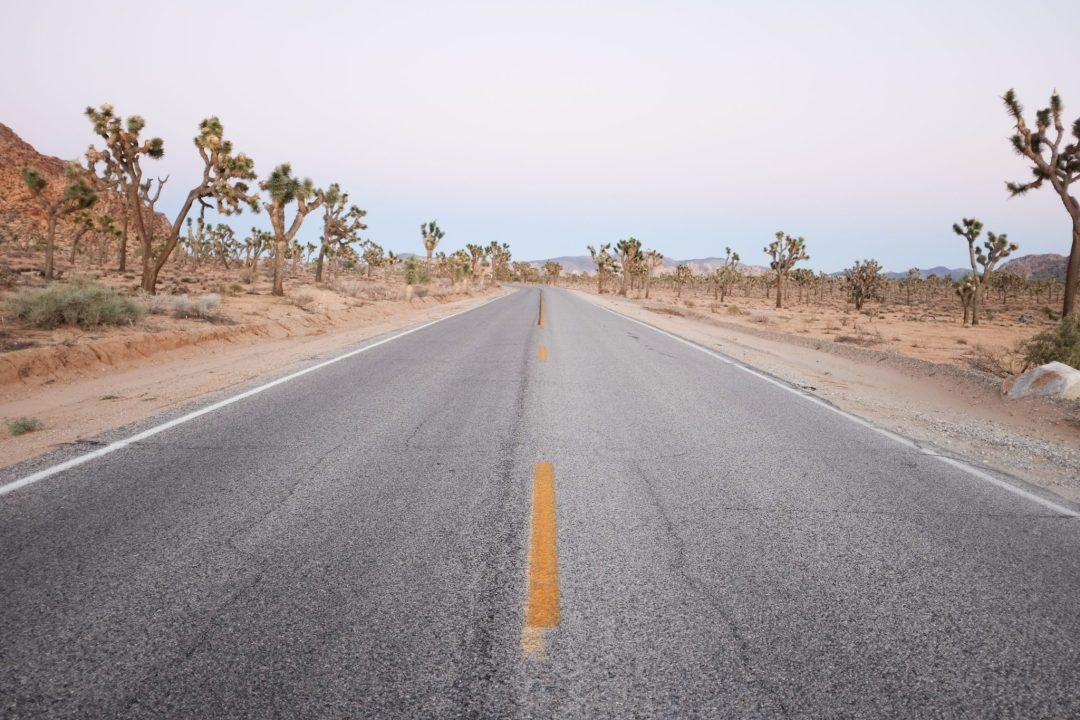 middle of the road in Joshua Tree National Park