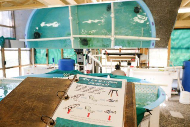 Sea Turtle Center 1