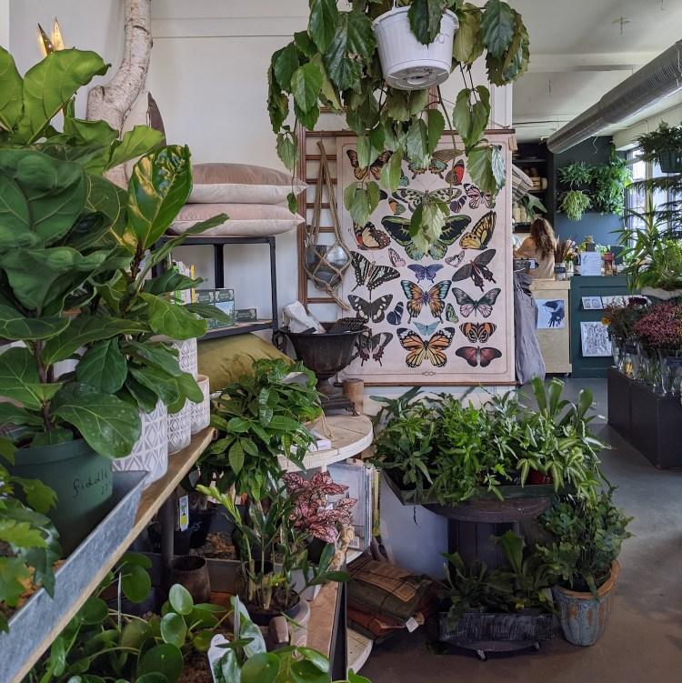 Best Instagram Spots in Asheville: Flora and Fauna in West Asheville