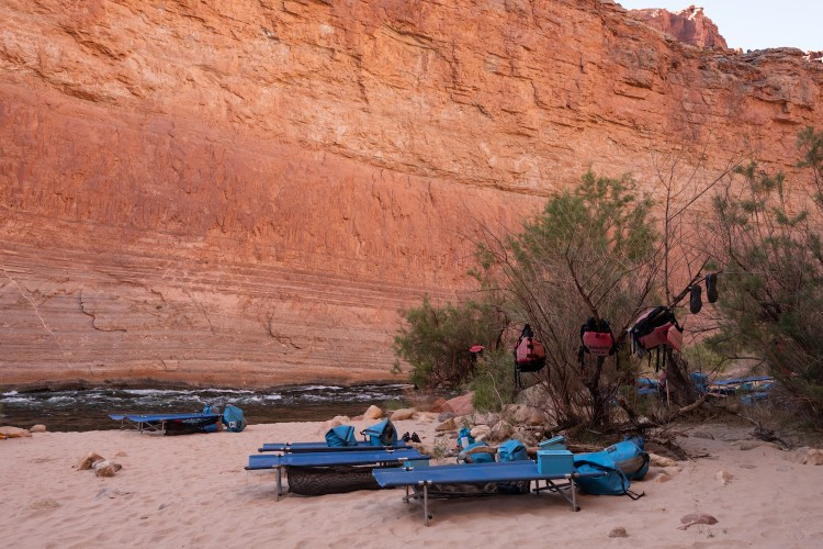 Five blue cots are set up in the sand along the Colorado River in the Grand Canyon. Life jackets hang from the trees and dry bags and ammo cans are strewn about camp.