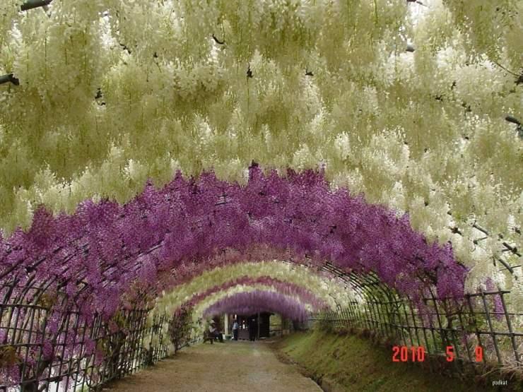 tunelul visteria2