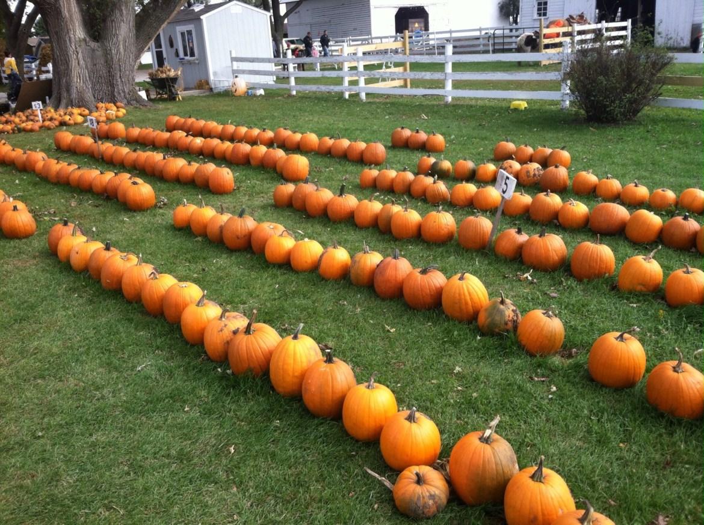 """pumpkins"""""""