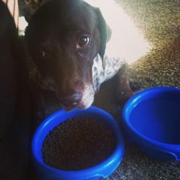 My oldest daughter brought Freckles his food after he had tumbled down the stairs.