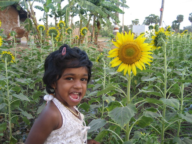 Daugther Posing in Sunflower garden