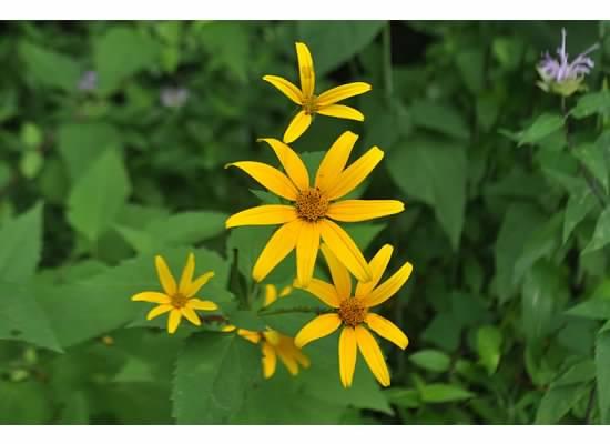 North Carolina flowers