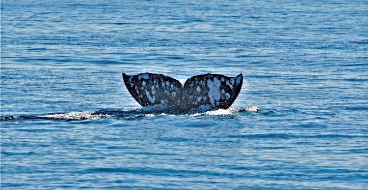 Melville Whale Tail