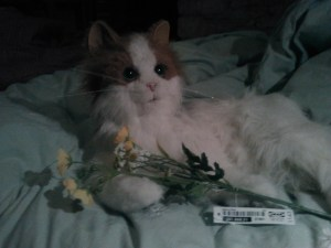 Toy cat with fake flowers from IKEA