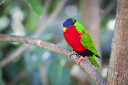 photo of colourful bird on branch
