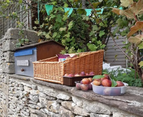 photo of basket of plums offered free on my front wall