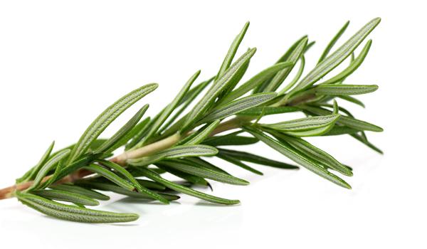 Rosemary - Home remédios para sarna
