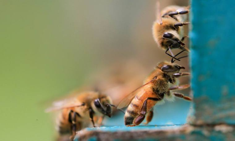 author joanne reed this is your quest Honey bees, a different type of herd mentality