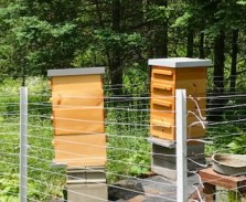 Busy hives