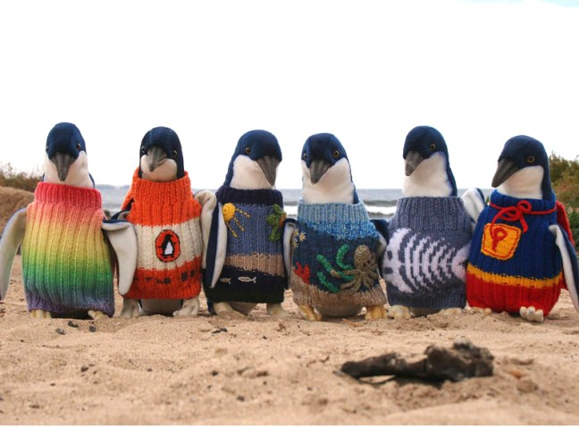 penguins in colorful hand knit sweaters for pollution protection