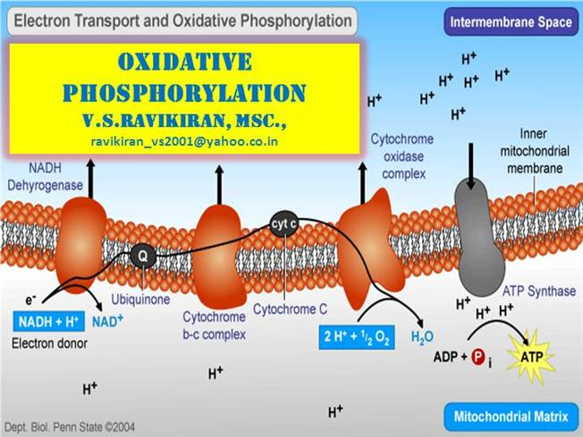 diagram of cellular energy compustar wiring oxidative phosphorylation for medical school |authorstream