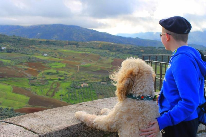 Q&A with Clive -Ireland's Autism Service Dog Extraordinaire view