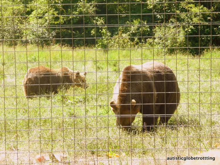 Day Trips From Brasov Romania With Kids bear