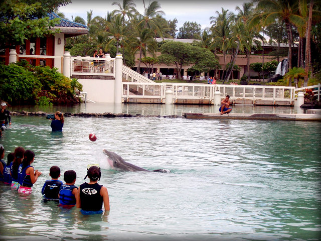 Autisticglobetrotting's Top Ten Unforgettable Animal Encounters dolfins