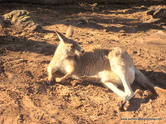 A Family Day at the Bonorong Sanctuary chilling