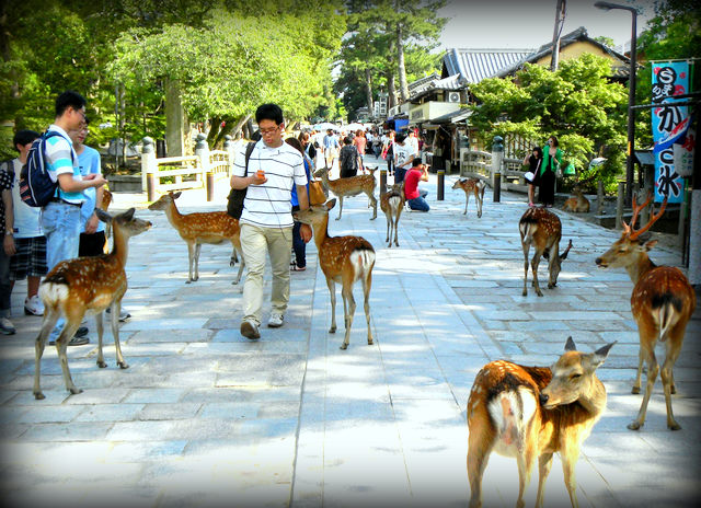 Autisticglobetrotting's Top Ten Unforgettable Animal Encounters deer
