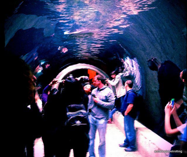 Five Sensory Attractions worth visiting in Dallas shark tubes