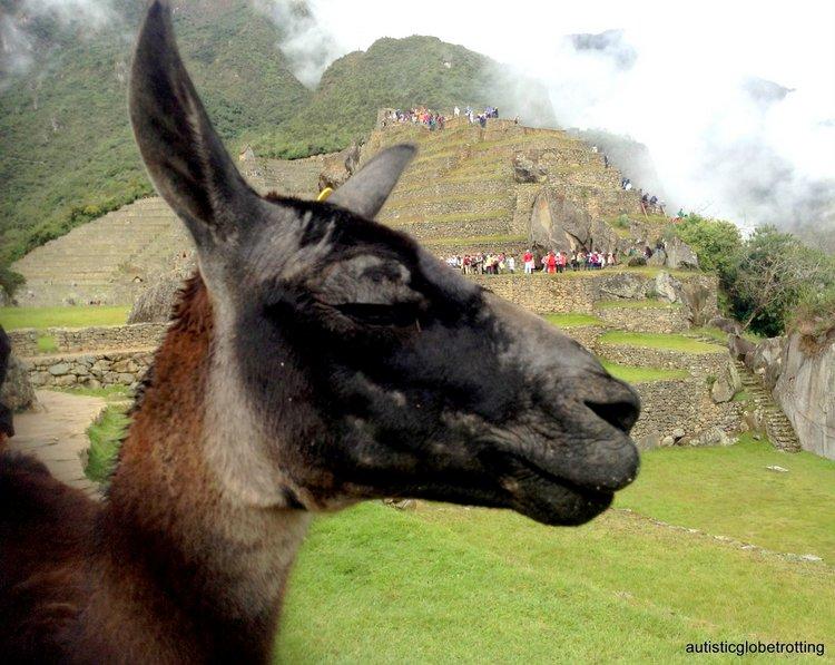 Exploring Peru's Machu Picchu with Family llama