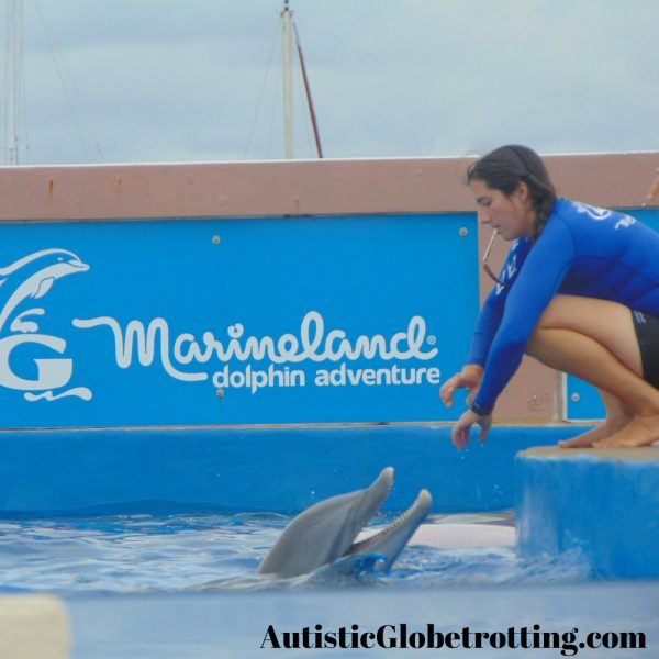 Florida St. Augustine Top Family Outdoor Attractions dolphin