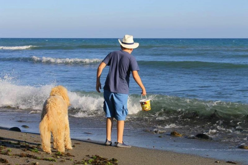 Q&A with Clive -Ireland's Autism Service Dog Extraordinaire seaside