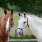 The Horse Boy Method Increases Cognitive Processing of Autistic Children
